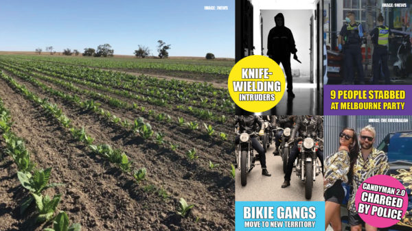 Criminal gangs have long been a problem in Australia. We wouldn't have as many seasons of Underbelly otherwise. Most gangs are well-organised and well-funded, with highly sophisticated money laundering operations in place to keep funding their activities.